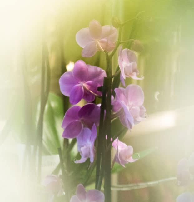 Palokka kukkapalvelut
